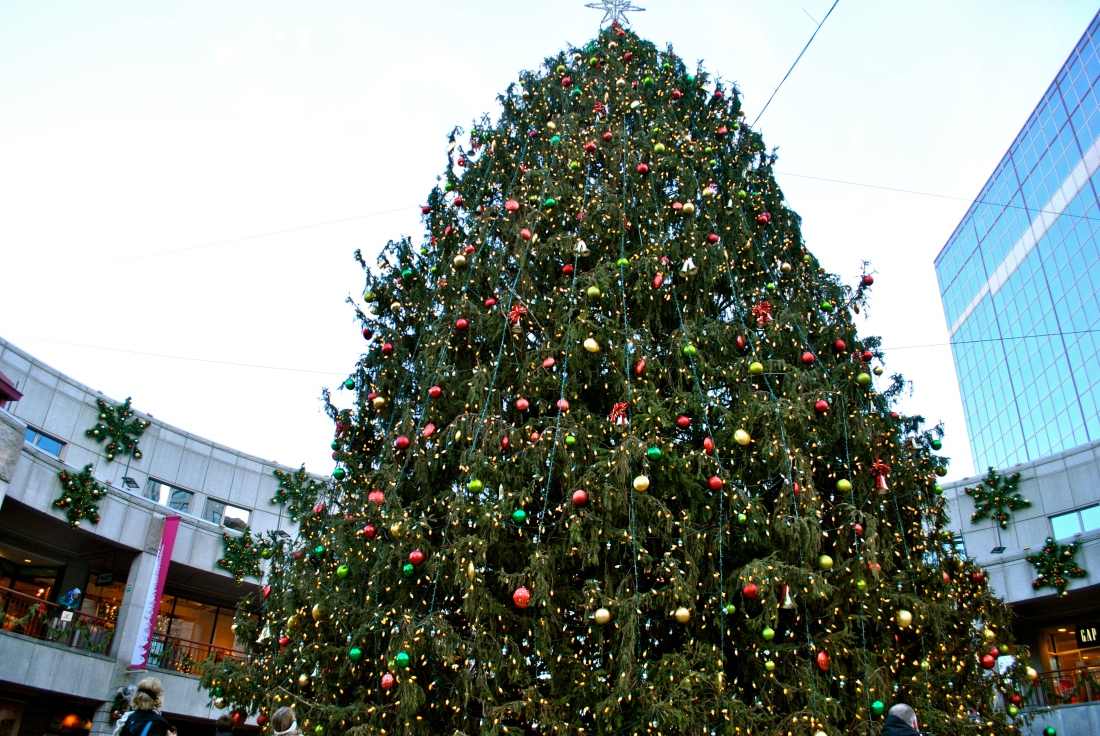 The giant Christmas tree outside of Quincy Market.