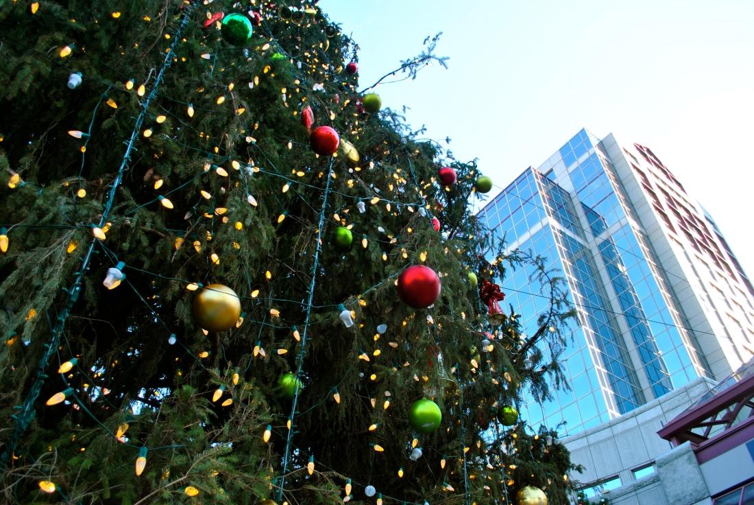 The Boston Christmas tree against the city skyline.